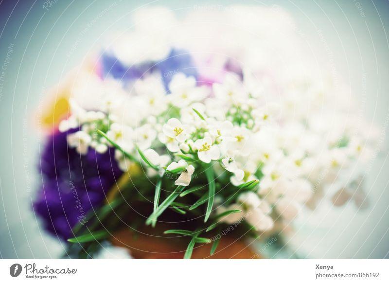 Für Dich Pflanze Blume blau grün weiß Romantik Blumenstrauß Blüte Geschenk Muttertag Nahaufnahme Menschenleer Tag Unschärfe