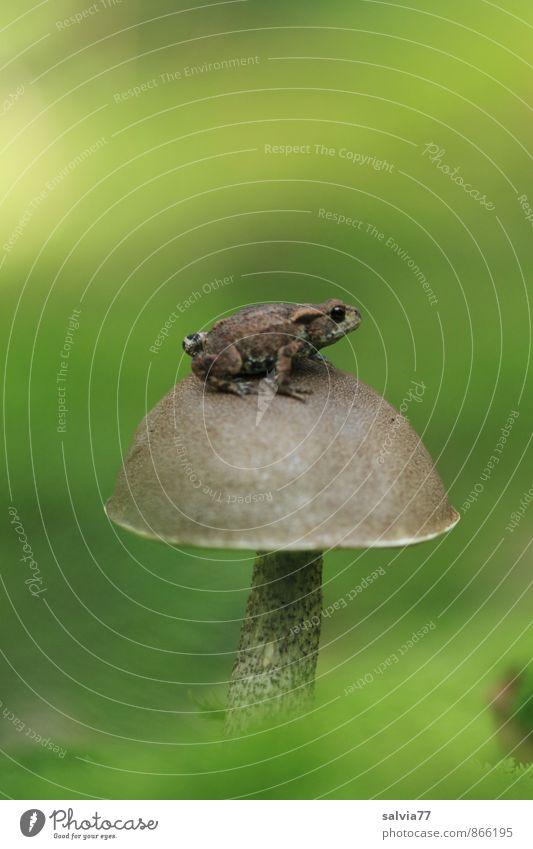 Hochsitz Natur Pflanze Tier Erde Sommer Herbst Moos Grünpflanze Wald Wildtier Frosch 1 beobachten genießen sitzen warten Ekel klein natürlich Neugier oben klug