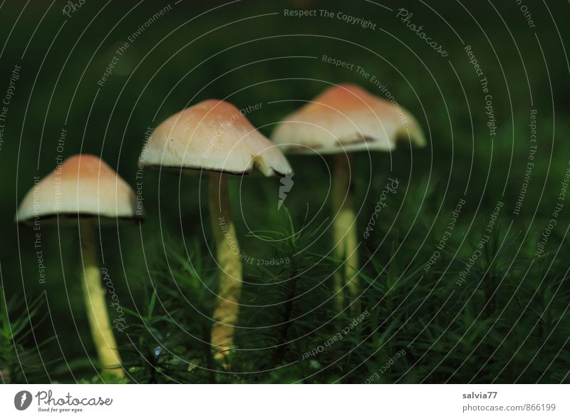 Trio Natur Pflanze grün Wald Umwelt gelb Leben Herbst natürlich klein braun Wachstum Erde frisch weich 3