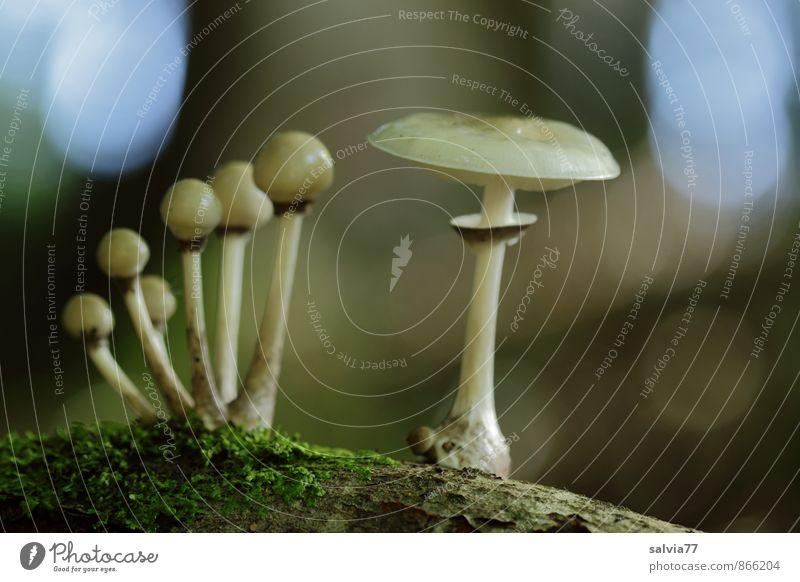 Gruppenfoto Umwelt Natur Pflanze Erde Herbst Moos Pilz Wald berühren stehen Wachstum dunkel dünn Ekel klein natürlich schleimig unten weich blau braun grau grün