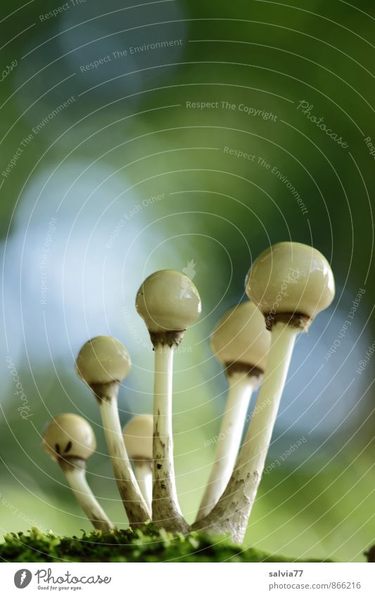 Sprösslinge... Natur Pflanze blau nackt grün weiß Erotik Wald Umwelt Herbst grau Wachstum frisch Erde weich Zusammenhalt