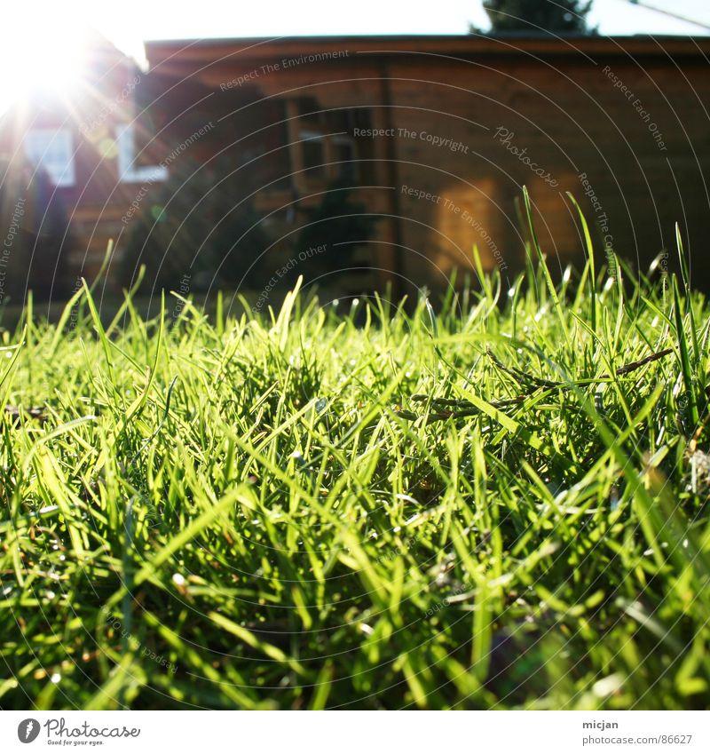 Willkommen auf dem Spielplatz   EOS Hütte Wiese grün braun Licht Sonnenstrahlen blenden Froschperspektive Holzhütte Holzhaus Haus Fenster Pflanze Wachstum