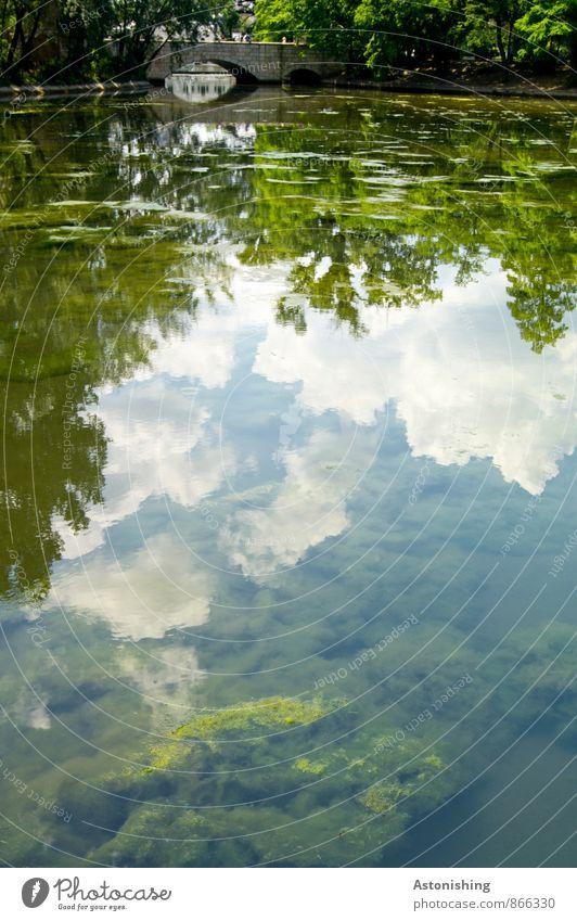 die Brücke Umwelt Natur Landschaft Pflanze Luft Wasser Himmel Wolken Sommer Wetter Schönes Wetter Baum Sträucher Park Teich Budapest hell nass schleimig blau