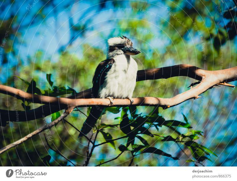 Buschmanns Uhr Natur Ferien & Urlaub & Reisen weiß Sommer Sonne Tier Wald Stil außergewöhnlich Vogel leuchten sitzen beobachten Schönes Wetter fantastisch Ast