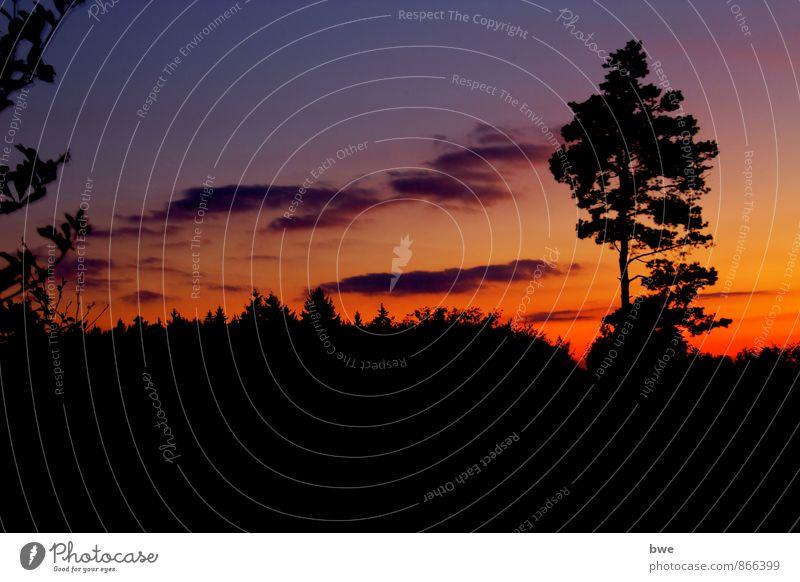 Dämmerung Umwelt Natur Landschaft Himmel Wolken Nachthimmel Horizont Sonnenaufgang Sonnenuntergang Baum Wald Hügel beobachten entdecken Erholung ästhetisch