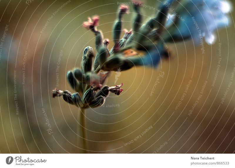 Tänzer Natur blau Pflanze Sommer Blume Landschaft Umwelt Wiese Gefühle Herbst Gras Liebe Blüte Frühling grau Glück