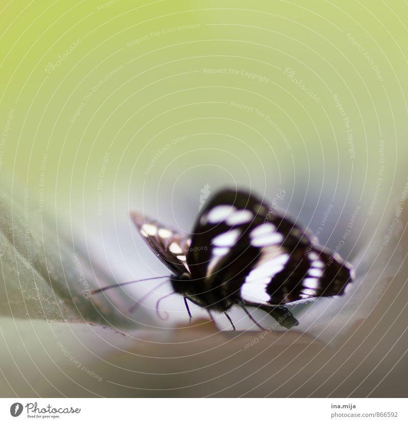 kleiner Schmetterling Umwelt Natur Tier Frühling Sommer Garten Park Wildtier Flügel Insekt 1 Leben zart zartes Grün Schwarzweißfoto Tierhaltung schön Muster