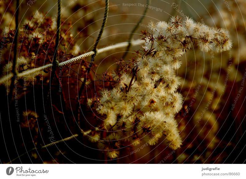 Netz und Gras gelb Stengel Halm Ähren glänzend schön weich Wiese zart beweglich sensibel federartig Sportplatz Schlaufe Herbst gold orange Pollen rispe rispen