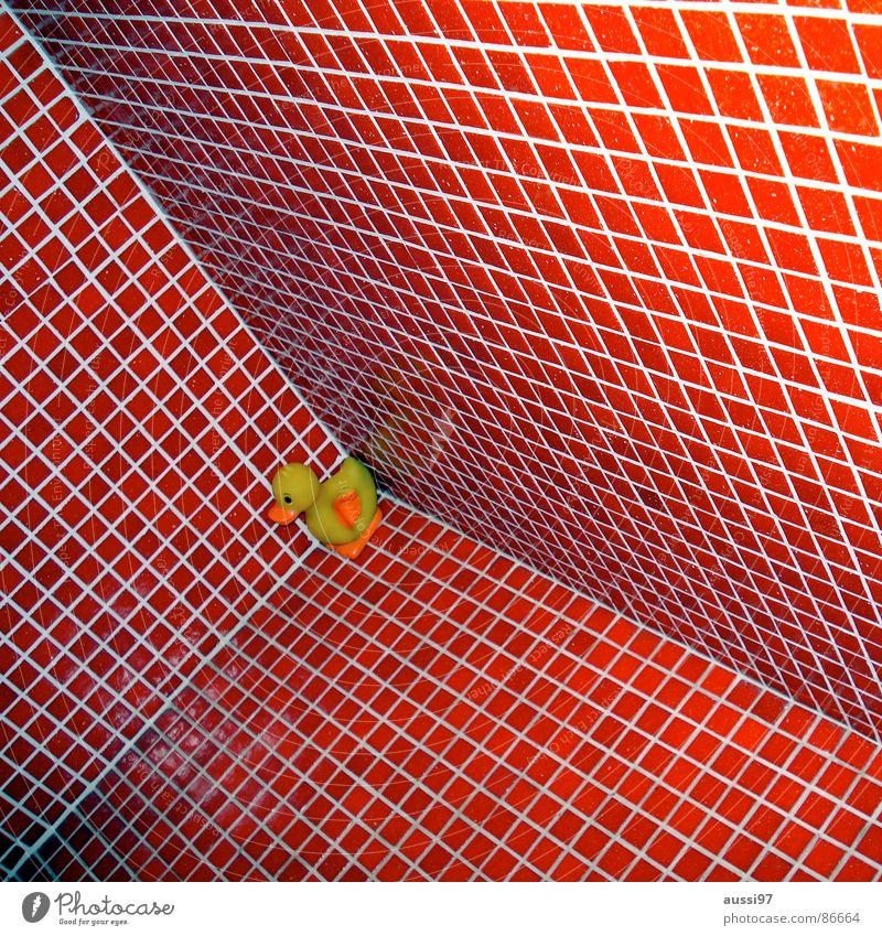 Q.-e. ich hab dich lieb! rot Perspektive Ecke Bad Schwimmbad Fliesen u. Kacheln Ente abwärts Schwindelgefühl Badeente Erpel Kubismus