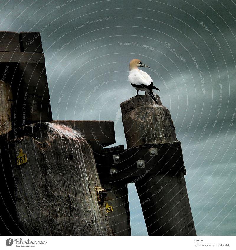 Auf verlorenem P[f]osten Farbfoto Außenaufnahme Nahaufnahme Menschenleer Textfreiraum rechts Textfreiraum oben Dämmerung Tierporträt Meer Himmel Unwetter See