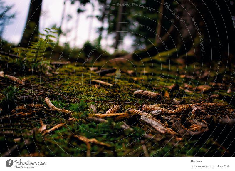 waldboden harmonisch Wohlgefühl Erholung ruhig Ausflug wandern Umwelt Natur Erde Herbst Baum Moos Wald Holz braun grün Lebensfreude Spaziergang Tanne Zapfen