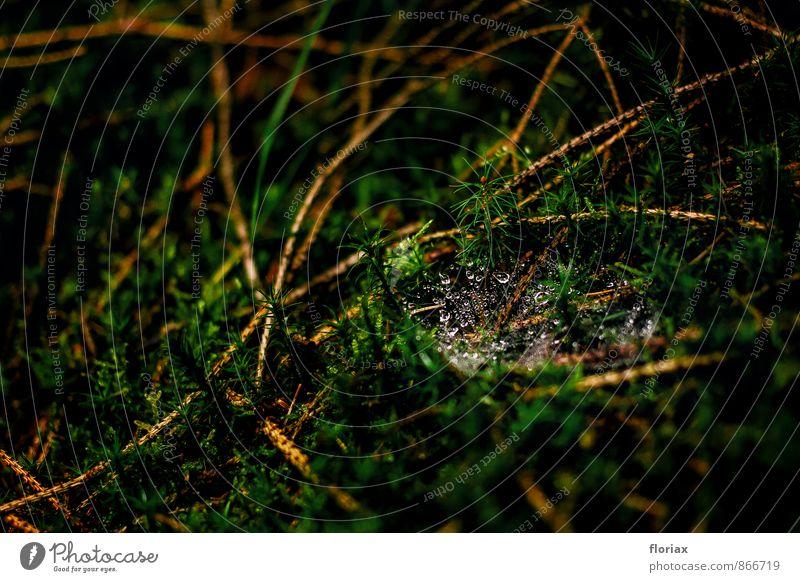 schwerelos Erholung Natur Wasser Wassertropfen Moos Wald Spinne Netz bauen glänzend hängen ästhetisch schön grün elegant Konzentration planen Zeit Spinnennetz