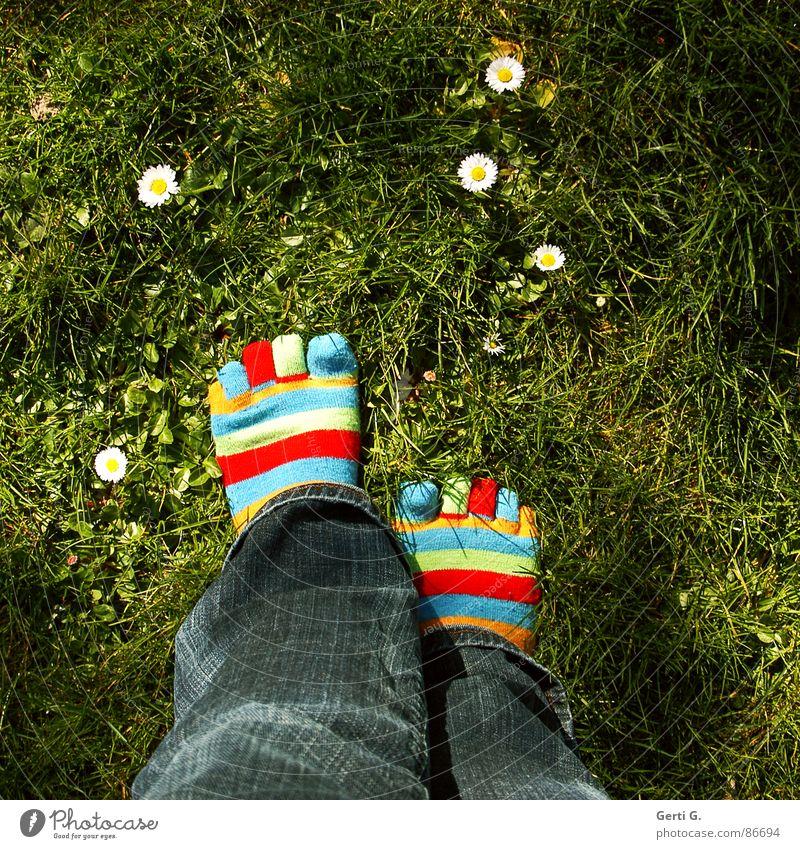 ich steh auf Gänseblümchen Strümpfe Ringelsocken gestreift mehrfarbig Frühling gelb Gras Wiese Zehen Jeanshose gehen Frühlingsgefühle Freude Frau zehensocken