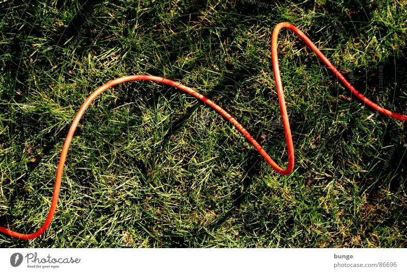 Kabel auf Gras Pflanze Sommer Wiese springen Frühling Garten Linie Elektrizität Kommunizieren Bodenbelag Verbindung Kurve Halm verbinden