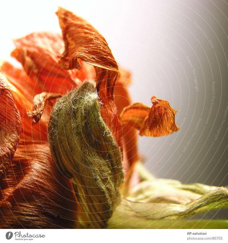 Blumengeschnörkel *2* Natur schön Blume grün Pflanze Herbst Blüte Garten Linie orange Wachstum zart Blühend Blumenstrauß Botanik Pollen