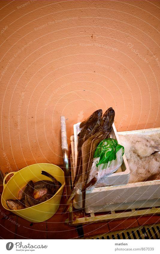 fishermans Mauer Wand Tier Nutztier Totes Tier Fisch Tiergruppe braun orange rot weiß Markthalle Wagen Rost Kiste Eimer parken Stillleben Farbfoto Innenaufnahme