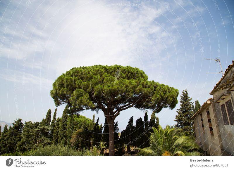 Vom Leben voller Müßiggang Himmel Natur Ferien & Urlaub & Reisen blau grün Sommer Sonne Baum Erholung Landschaft Haus Wand Mauer Stein braun träumen