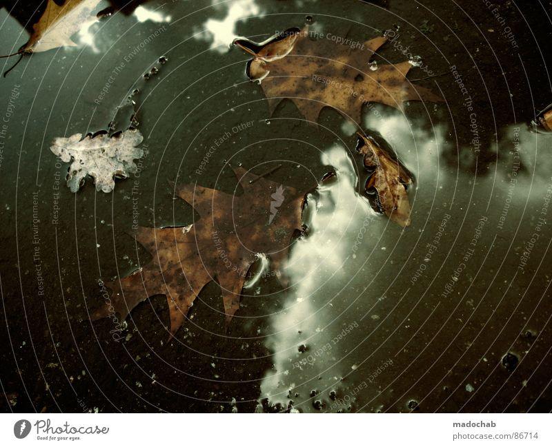 SCHLAFLOS Pfütze wirklich Nebel nass Herbst trist dunkel Leidenschaft Spiegel Vermieter Mieter Ghetto hässlich Himmel Wolken schlechtes Wetter himmlisch Götter