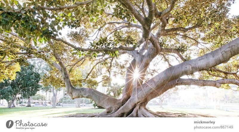 Good morning kiss Natur schön Baum Erholung Umwelt Leben natürlich Denken Freiheit Garten Park Kraft Ausflug genießen Warmherzigkeit Blühend