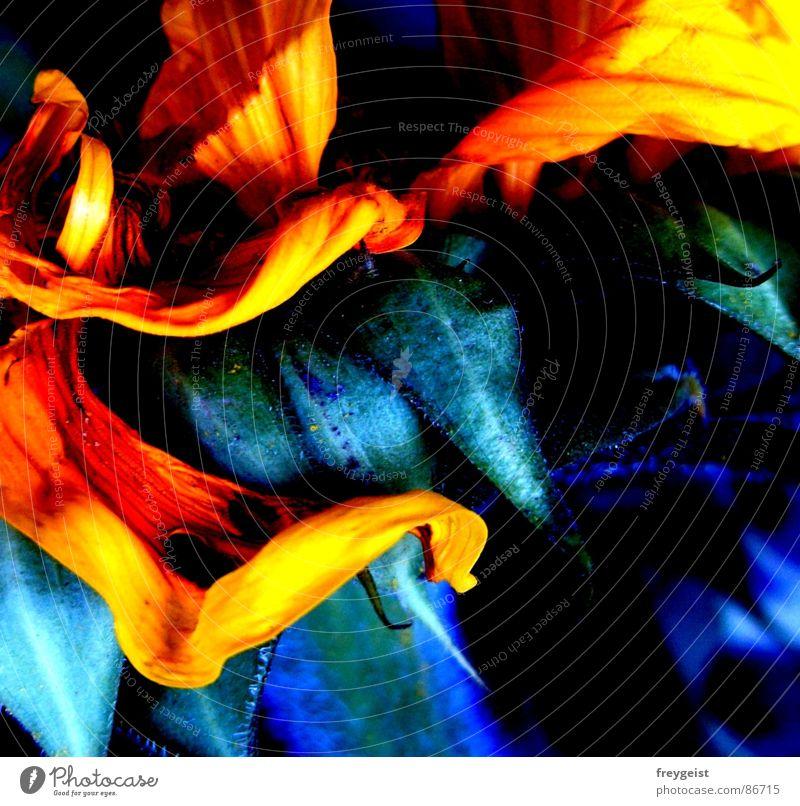 Fire Flower I Blume Sonnenblume glühen grell Natur gelb grün Quadrat abstrakt Aquarell Kunst Gemälde Sommer flower flowers sunflower mehrfarbig Farbe colour