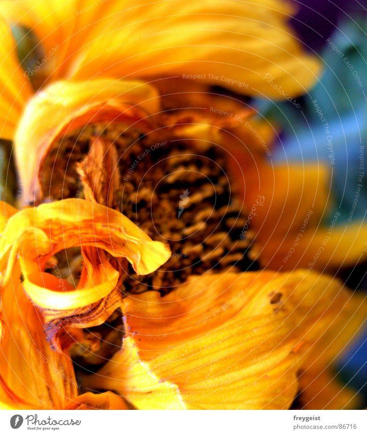 Fire Flower II Natur Blume grün Sommer gelb Farbe Spielen Fröhlichkeit Quadrat Gemälde Sonnenblume grell glühen