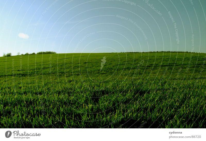 Green is the Colour Gras grün Wiese Feld Ferne groß weitläufig gleich minimalistisch Sauberkeit frei möglich Frühling Horizont aufwachen Wachstum Himmel Erde