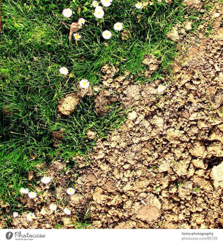 Spring Disparity I Verschiedenheit Yin und Yang Dürre steinig braun Wege & Pfade Afrika Feld Wiese grün Ackerbau Landwirtschaft Gänseblümchen Blume Frühling