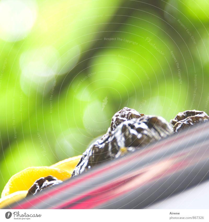 auf die schiefe Bahn geraten Gemüse Frucht Öl Olivenöl Weinblatt Dolma Dolmades Ernährung Mittagessen Büffet Brunch Picknick Bioprodukte Vegetarische Ernährung