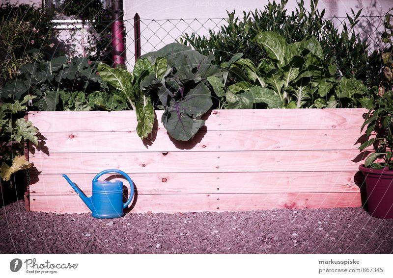 urban gardening - hochbeet Stadt Haus Gesunde Ernährung Leben Essen Gesundheit Garten Lebensmittel Wohnung Lifestyle Häusliches Leben Frucht Fitness