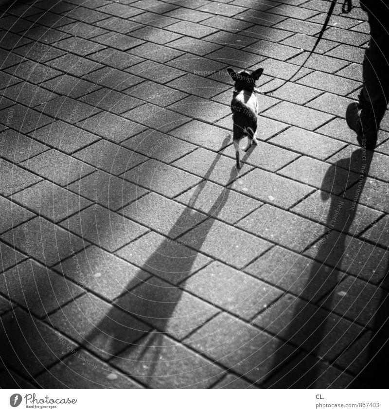 eigentlich bin ich ganz anders Spaziergang Gassi gehen Mensch Leben Beine 1 Verkehr Fußgänger Straße Wege & Pfade Tier Haustier Hund Hundeleine groß klein