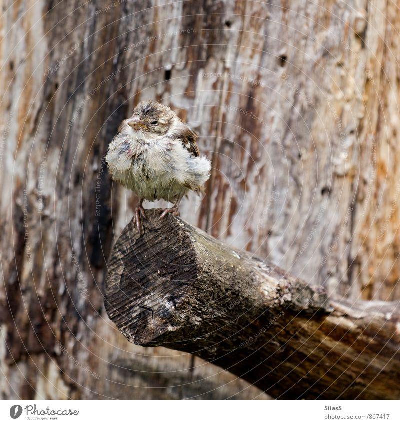Tarnkappenbomber Natur weiß Baum Tier grau braun Vogel ästhetisch Ast