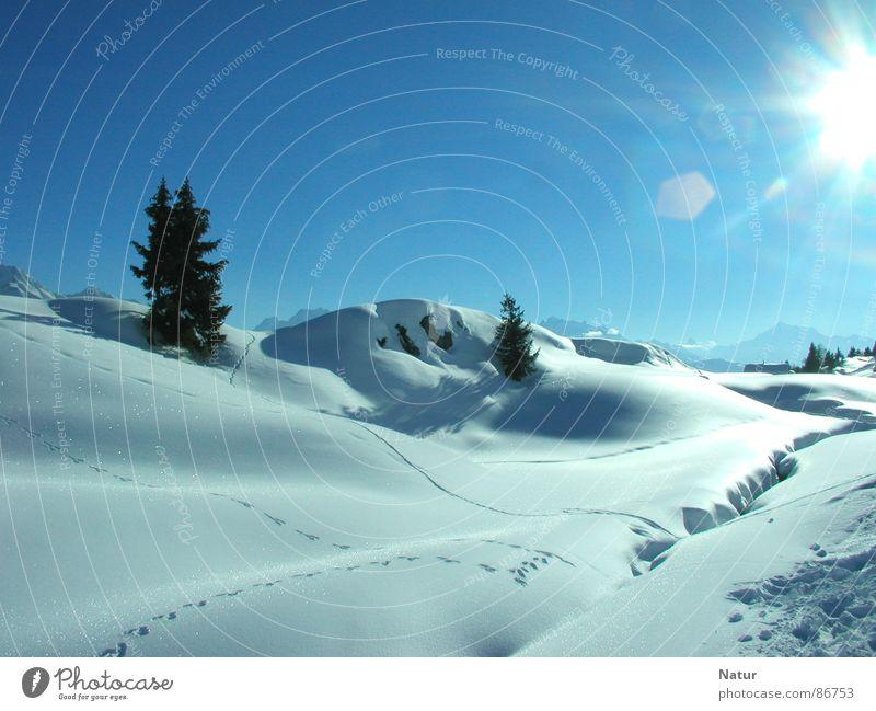 Sonnige Schneelandschaft der Riederalp Schweiz Region Talsohle ästhetisch Winter Sonne Fährte Schönes Wetter Berge u. Gebirge Natur schön Schneedecke