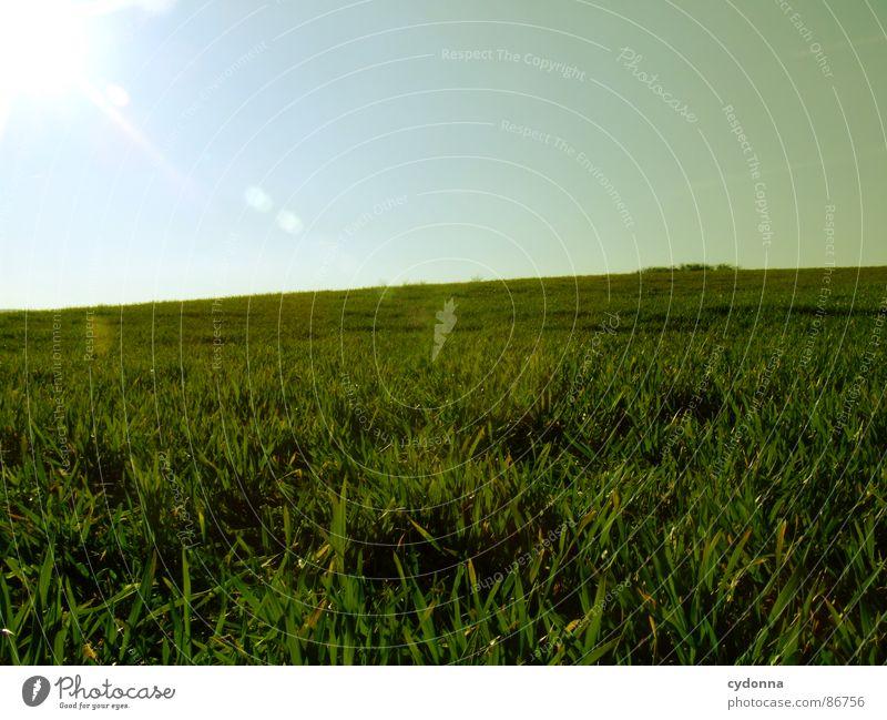 Green is the Colour I Gras grün Wiese Feld Ferne groß weitläufig gleich minimalistisch Sauberkeit frei möglich Frühling Horizont aufwachen Wachstum Himmel Natur