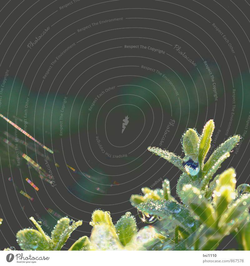 Tröpfchen Natur blau Pflanze schön grün weiß Wasser Sommer rot schwarz gelb klein außergewöhnlich Garten Luft Park