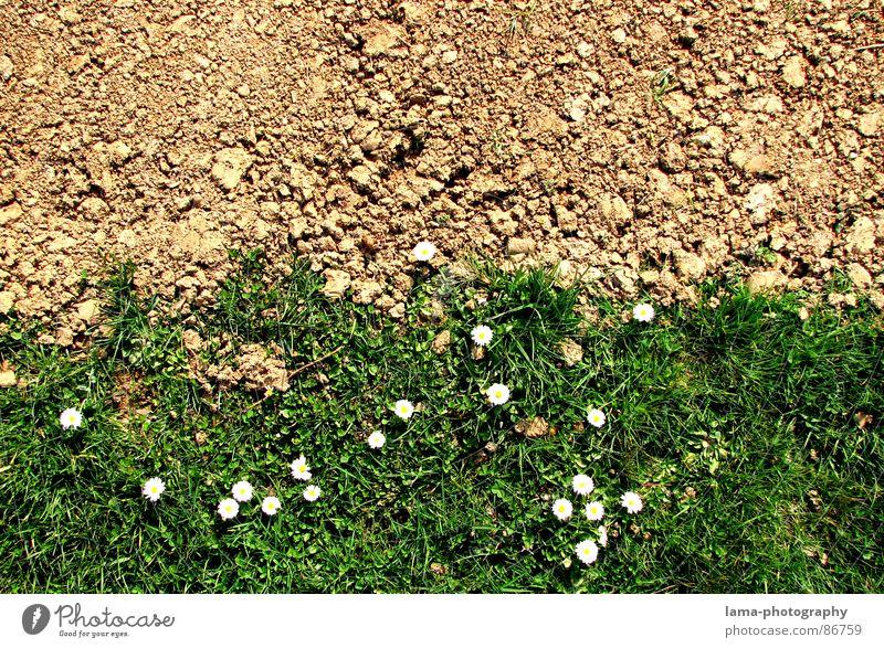 Spring Disparity II grün Sommer Blume Freude Frühling Wiese Wege & Pfade Stein braun Linie Sand springen Feld Erde Fußweg Hoffnung