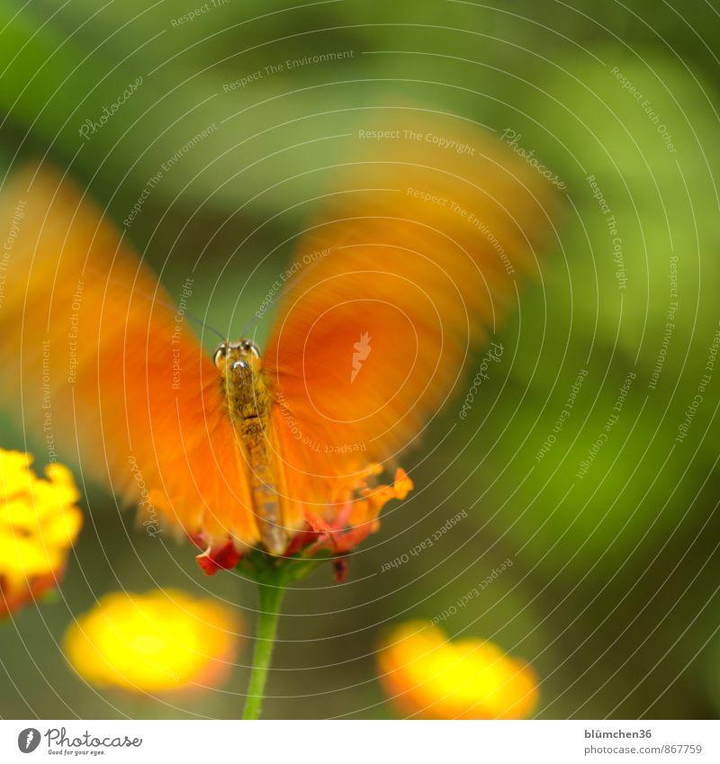 Entfaltungsmöglichkeiten | Die Flügel glätten... schön Tier Auge Blüte klein fliegen orange elegant Wildtier sitzen ästhetisch Fell Insekt Schmetterling Abheben