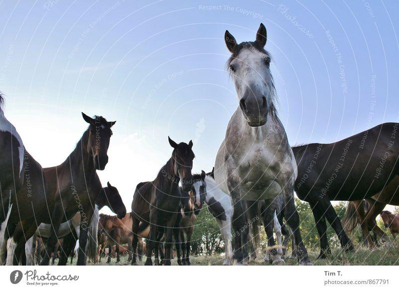 Wildpferde Natur Landschaft Tier Idylle Wildtier Tiergruppe Pferd Herde Polen