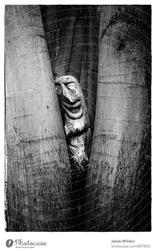 ein Männlein steht im Walde Natur Pflanze Baum Park Holz Zeichen Idylle Schwarzweißfoto Außenaufnahme Experiment abstrakt Strukturen & Formen Schatten Kontrast