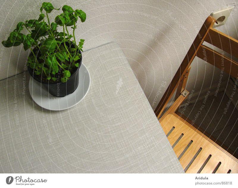 + stuhl Basilikum Tisch Küche Steckdose Geschmackssinn Kräuter & Gewürze Strukturen & Formen Sauberkeit grün sitzen Wohnung Holz Ernährung Möbel Stuhl