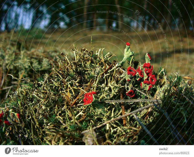 Waldbewohner Natur grün schön rot Pflanze Wald Landschaft Umwelt klein Blüte Zusammensein Erde Wachstum leuchten nah Duft