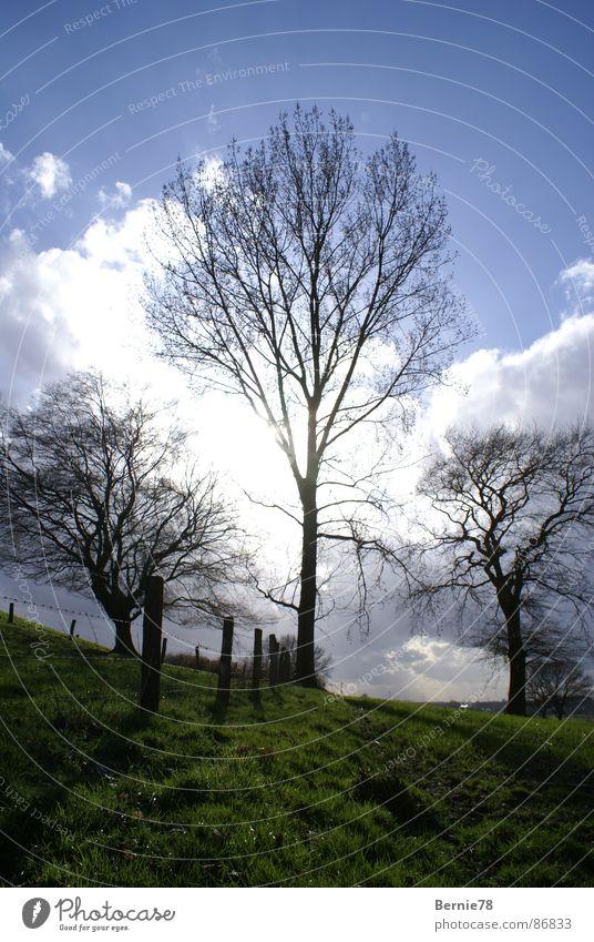 3 Bäume Wiese Zaun Feld Sonnenlicht Frühling Gras Wolken Waldwiese Himmel Natur Weide