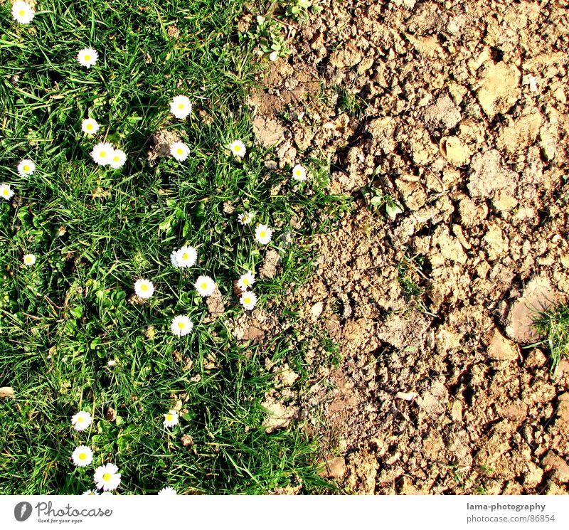 Spring Disparity III Dürre steinig braun Wege & Pfade Afrika Feld Wiese grün Ackerbau Landwirtschaft Gänseblümchen Blume Frühling Sommer Grenze Krieg Hoffnung