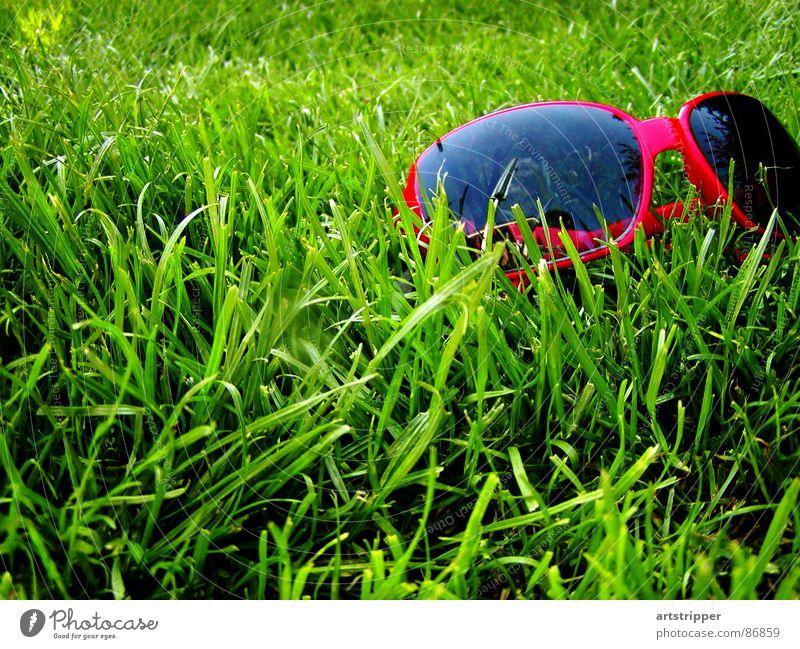 redrosefornose II grün rot Sommer Ferien & Urlaub & Reisen Erholung Wiese Gras Frühling Garten Wärme Glas Fliege Wetter Rasen Pause Brille