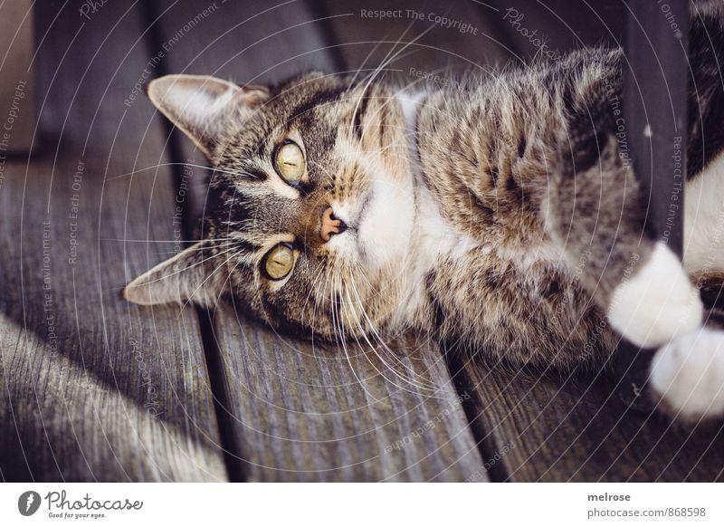 relaxing cat Sommer Garten Tier Haustier Katze 1 Terrassenboden Stuhlbein genießen liegen Neugier niedlich braun grau weiß Tierliebe Gelassenheit ruhig Trägheit