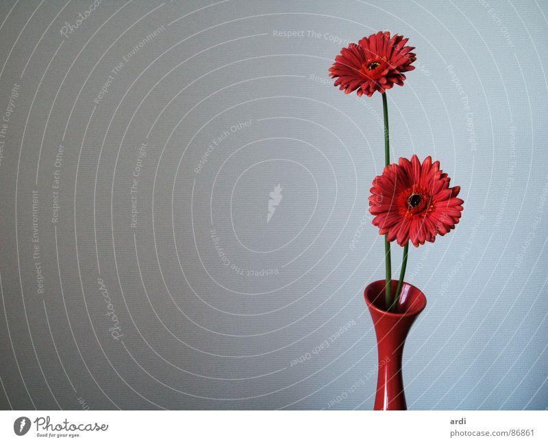 stockige blumen Natur schön Blume Pflanze Gefühle Blüte zart Blühend Blumenstrauß Vase zerbrechlich Zärtlichkeiten filigran Gerbera lieblich Sense