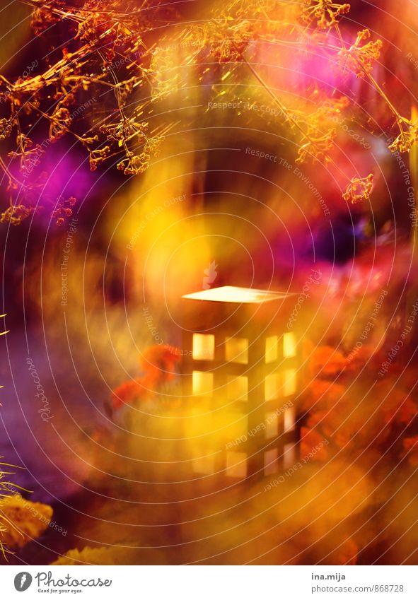 Gartenlaterne Umwelt Natur Sonnenaufgang Sonnenuntergang Sonnenlicht Sommer Herbst Schönes Wetter Pflanze Blume Blüte mehrfarbig gelb gold Farbe Frieden