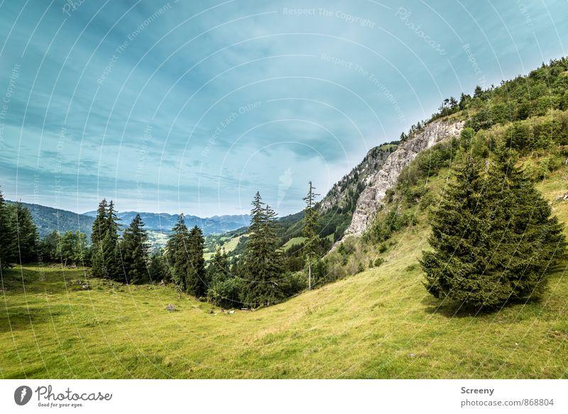 Blick ins Tal Natur Landschaft Pflanze Wolken Sommer Wetter Alpen Berge u. Gebirge Allgäu Allgäuer Alpen blau grün ruhig Weide Tanne Felsen Farbfoto