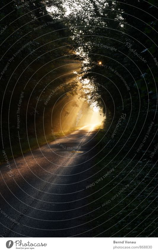 Lichtblick schön Sonne Natur Herbst Nebel Wald Verkehr Straße träumen orange Gefühle Stimmung Begeisterung Kraft Warmherzigkeit Perspektive Beleuchtung Dunst