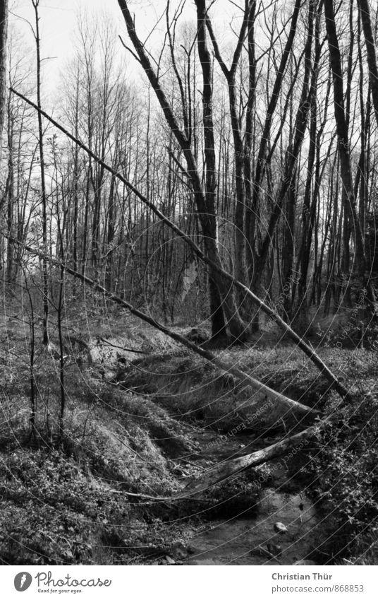 Bach durch den Wald Natur Baum Erholung ruhig Wald Umwelt Gras Frühling Gesundheit außergewöhnlich Wetter Zufriedenheit Tourismus wandern Ausflug Schönes Wetter