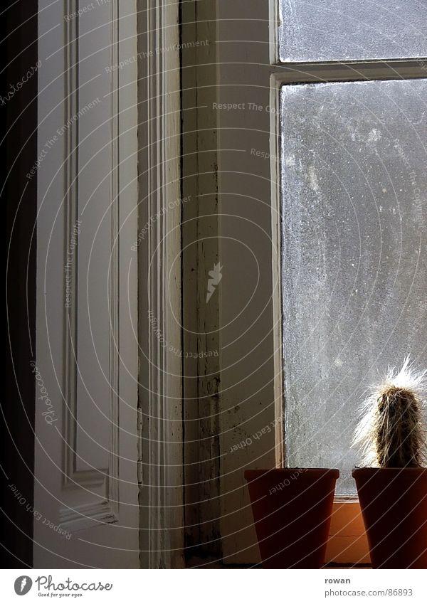 fensterbank Tontopf Blumentopf Holzfenster Kaktus klein Topf rot Fenster dreckig Fensterbrett Geländer Glasscheibe Fensterladen Sonne Physik Fensterrahmen ruhig